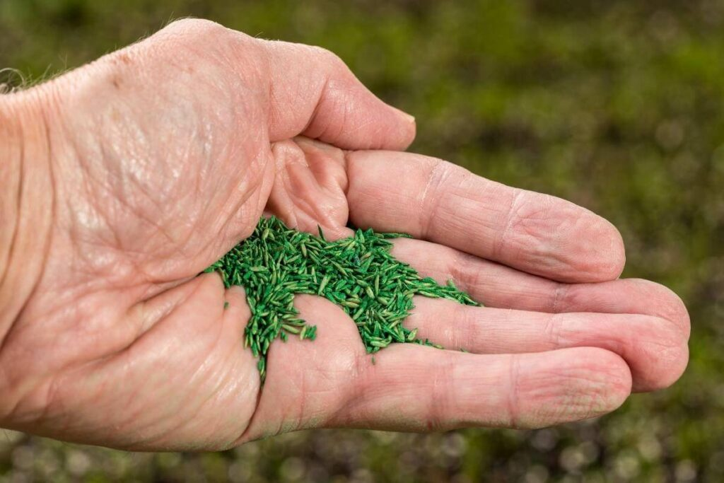 What are coated grass seeds