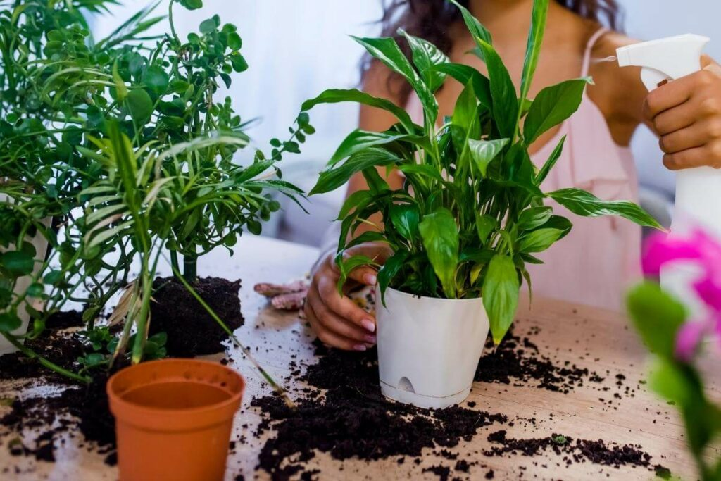 Why Are Bugs So Attracted to Your Indoor Plants?