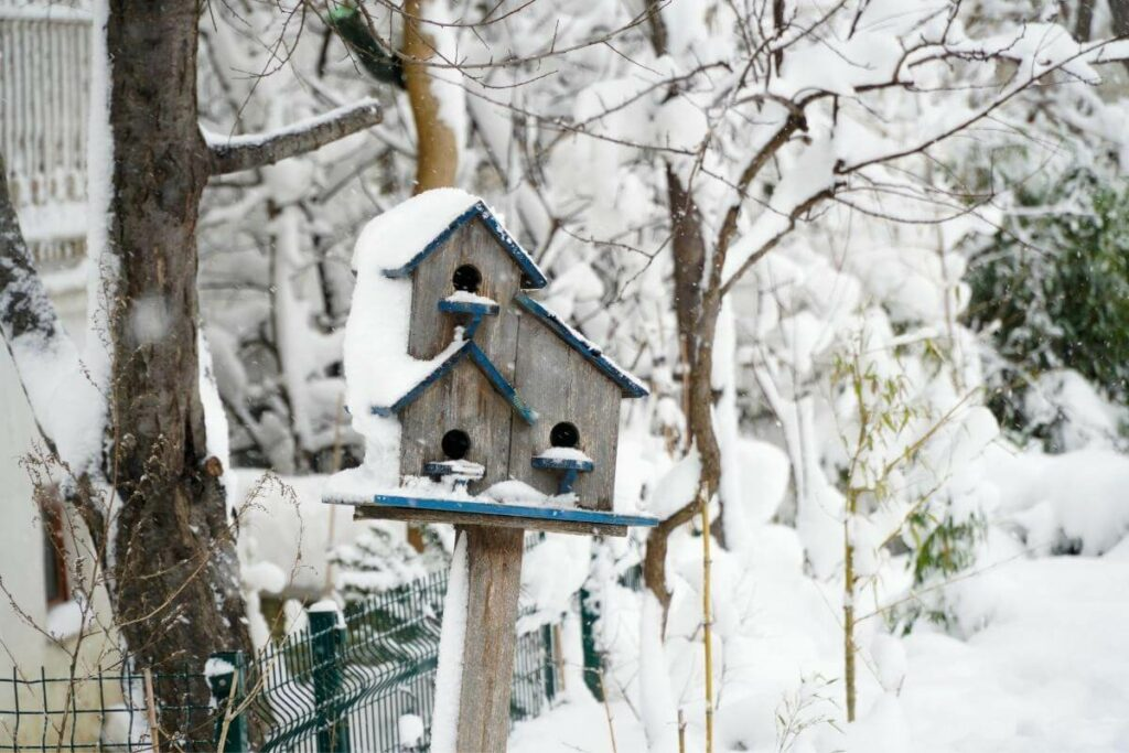 Birds will come to winter nestbox