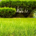 Is it Worth Paying for Lawn Care?